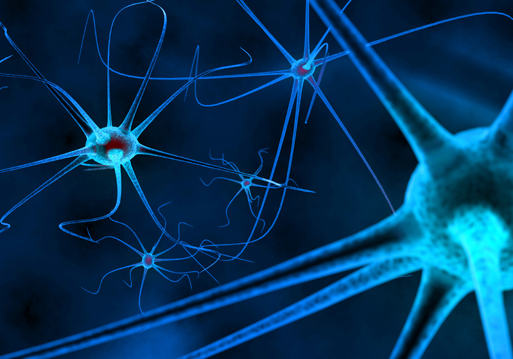 Praticien(ne) Certifié(e) En Neurosciences Appliquées